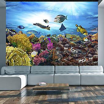 Fotobehang - Coral reef