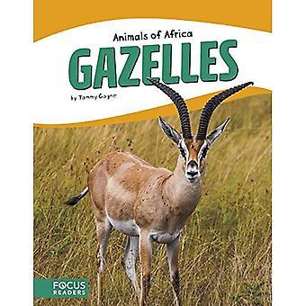 Animaux d'Afrique: Gazelles