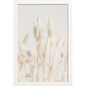 JUNIQE Print - Suszone kwiaty Lagurus 2 - Kwiatowy plakat w kremowym kolorze białym i szarym