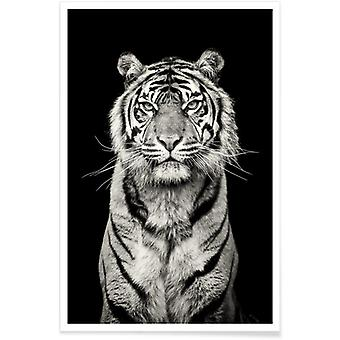 JUNIQE Print -  Head of the Pack - Tiger Poster in Grau & Schwarz