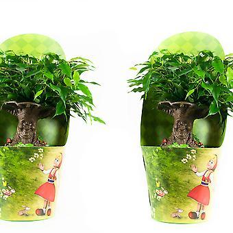 Kamerplanten van Botanicly – 2 × Treurvijg – Hoogte: 30 cm – Ficus benjamina
