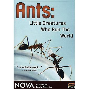 Nova - Nova: Ants-Little Creatures Who Run the World [DVD] USA import