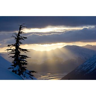 Sonnenstrahlen Shinning durch Wolken bei Sonnenuntergang entlang Turnagain Arm W eine Fichte im Vordergrund Chugach National Forest Alaska PosterPrint