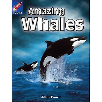 Fantastiska valar: Lila facklitteratur (Rigby stjärnigt oberoende)