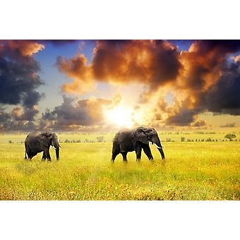 Tapet väggmålning afrikanska elefanter