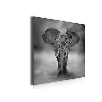 Tableau photo sur toile imprimée elephanteau sur pied, 50x50cm