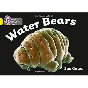 Acqua orsi: Banda giallo/3 fase 8, Bk 12 (Collins Big Cat)