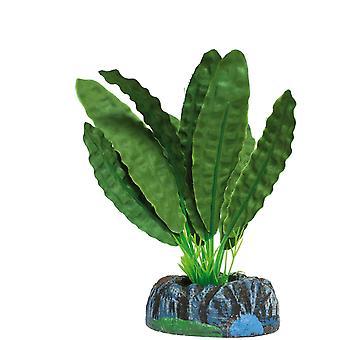 Aquatic Plants Aponogetón (Fische , Aquariumsdeko , Künstliche Pflanzen)