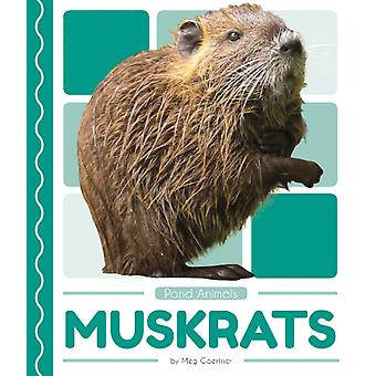 Pond Animals Muskrats di Gaertner & Meg