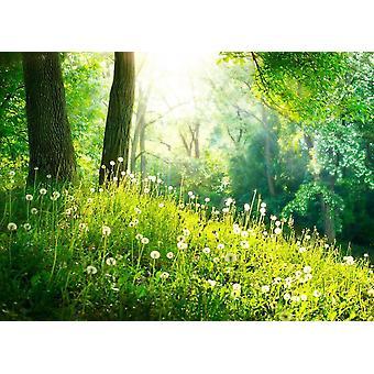 Tapet väggmålning grönt gräs och träd