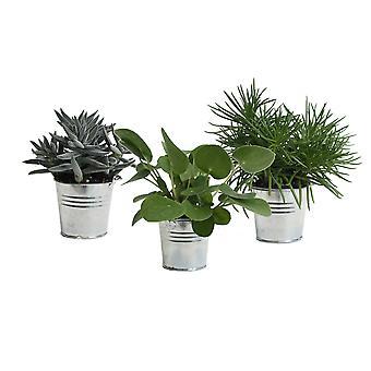 Zimmerpflanze von Botanicly – Amazone Mix in silbernem Metall Übertopf als Set – Höhe: 15 cm