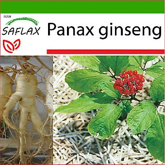Saflax - 10 Samen - Mit Erde - Koreanischer Ginseng - Ginseng coréen - Ginseng - Ginseng genuino coreano - Echter Koreanischer Ginseng