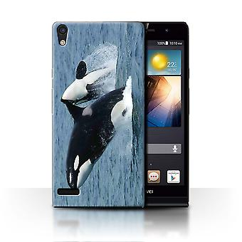 STUFF4 Case/Cover for Huawei Ascend P6/Orca/Killer Whale/Marine Wildlife