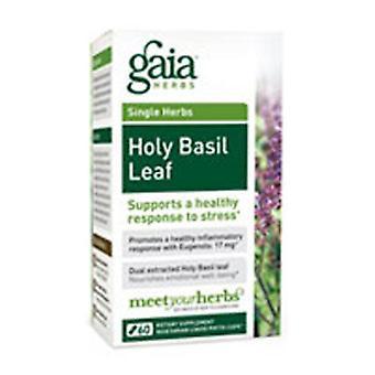 Gaia Yrtit Pyhä basilika, 60 korkkia