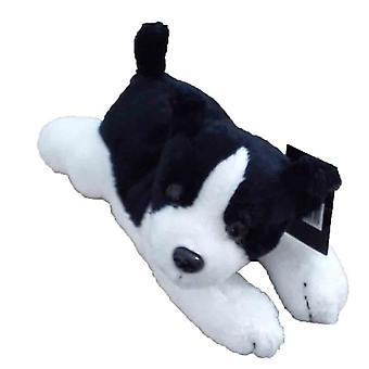 Dowman pas kumpel Border Collie