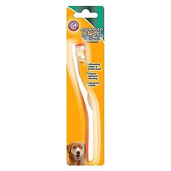 Bras & brosse à dents de chien marteau