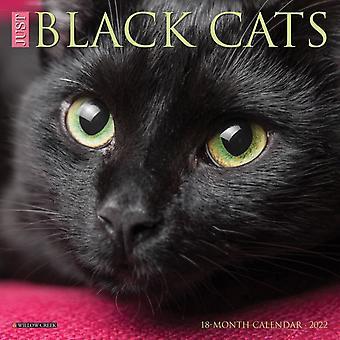 Just Black Cats 2022 Mini Wall Kalender av Willow Creek Press
