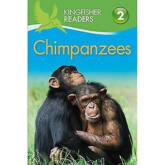 Ijsvogel lezers: Chimpansees (niveau 2 begin te lezen alleen)