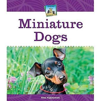 Les chiens miniatures (Sandcastle: Mini merveilles animales)
