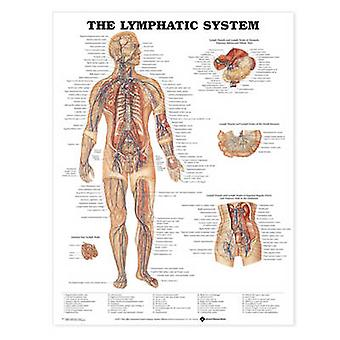 The Lymphatic System Anatomical Chart by Prepared for publication by Anatomical Chart Company