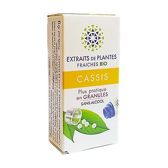 Fresh plant extracts Black currant 130 granules