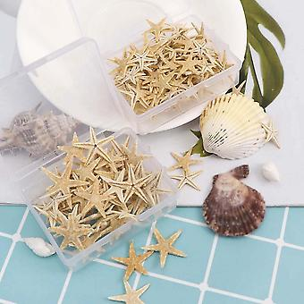 Natural Beach Craft Starfish Seashell - Naturalne Gwiazdy Morskie Diy Beach Wedding