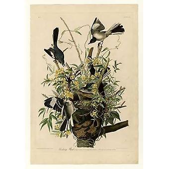 Impresión de cartel pájaro burlón por John James Audubon