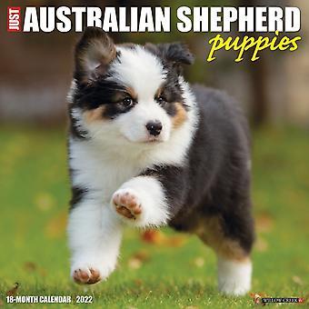 Just Australian Shepherd Puppies 2022 Wall Calendar Dog Breed by Willow Creek Press