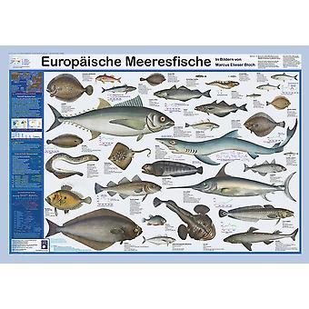 European Marine Fish Plakat german A1 Planet Poster Editions 59.4 x 84.1 cm