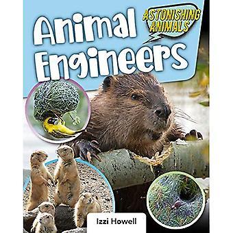 Animal Engineers