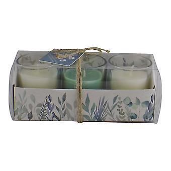 Uppsättning av 3 olivlund doftade votivljus i presentförpackning