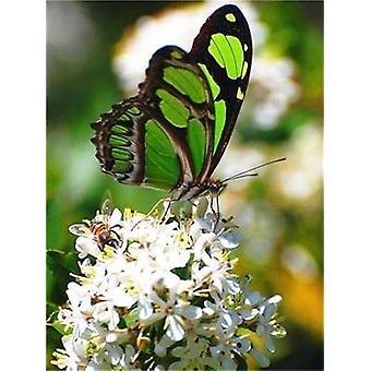 Diy Butterfly Rhinestones Pictures Full Display Diamond Painting - Diamond