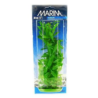 "Marina Hygrophila Plant - 12"" Tall"