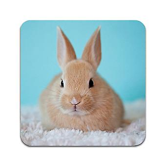 2 ST Rabbit Coasters