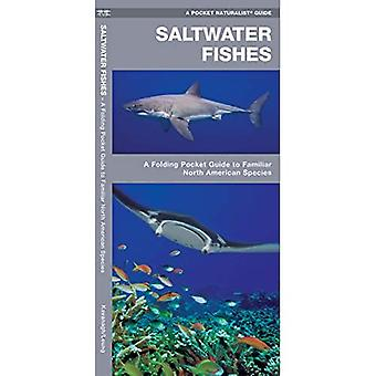 Saltwater Fishes (Pocket Naturalist)