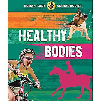 Human Body, Animal Bodies: Healthy Bodies (Human Body,� Animal Bodies)