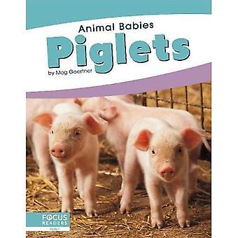 Animal Babies: Piglets