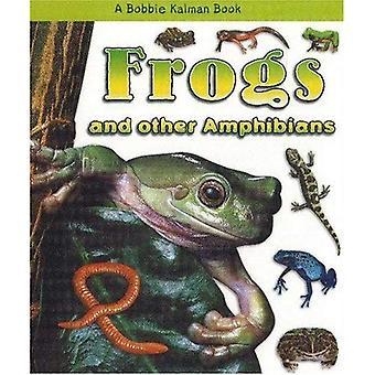 Grodor och andra amfibier