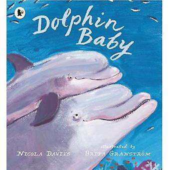 Dolphin Baby 1 Nature Storybooks