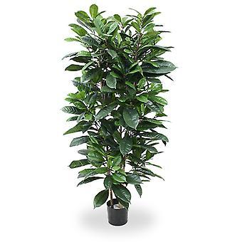 Kunstig Ficus Cyathistipula Deluxe 160 cm
