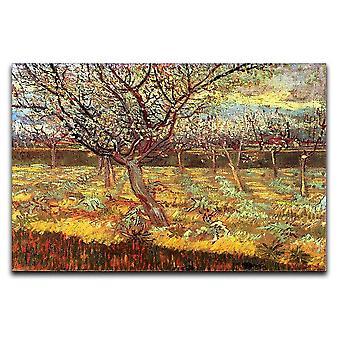 Aprikoosipuut kukkakankaalla