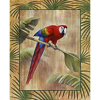 Scarlet Macaw Poster Print by Ron Jenkins (16 x 20)