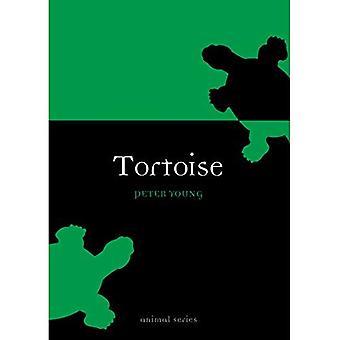 Tortue (Animal)