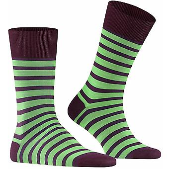Falke Even Stripe Socks - Violetonyx Purple