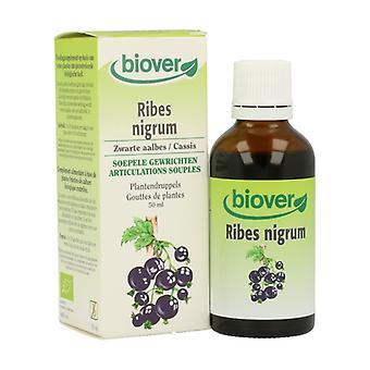Ribes Nigrum (Mustaherukka) 50 ml