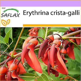 Saflax - 6 graines - Cockspur Coral Tree - Ceibo - Albero del corallo - Árbol del coral - Karibischer Korallenstrauch