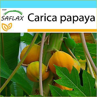 Saflax - Set regalo - 30 semi - albero di melone - Papayer - Papaia - Papaya - Tropischer Melonenbaum / Papaya