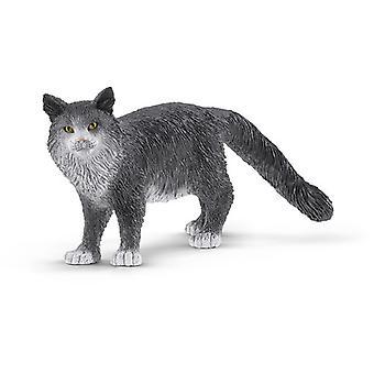 Maine Coon Katt USA import