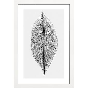 JUNIQE Print - Skeleton of a Leaf - Feuilles & plantes Poster en Noir & Blanc