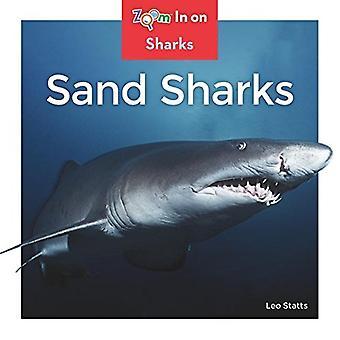 Sand Sharks (requins)